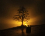 چراغ سایه ساز ال ای دی طرح درخت